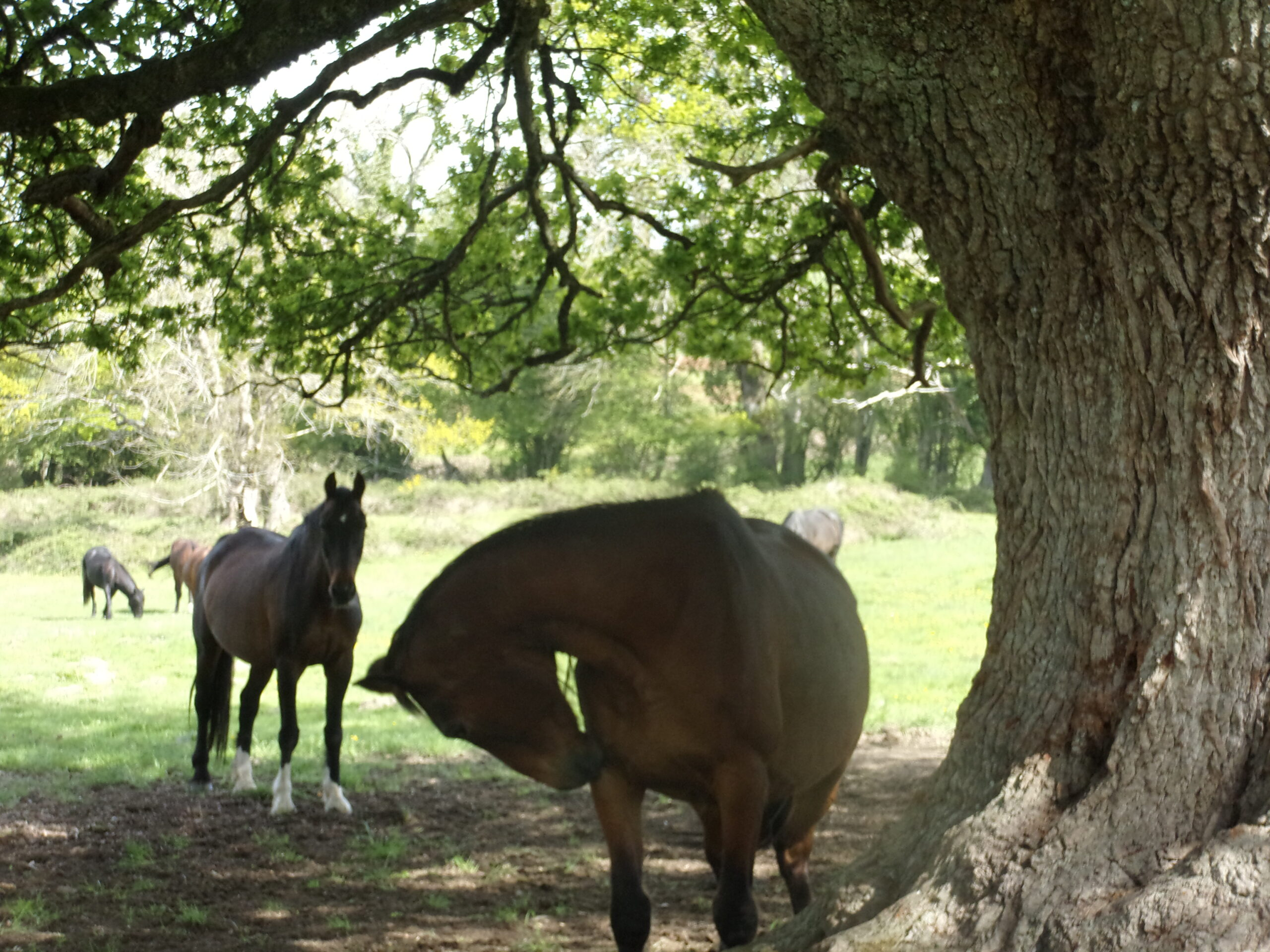 HORSE RETIREMENT FARM - WELCOME TO OUR NEW WEBSITE